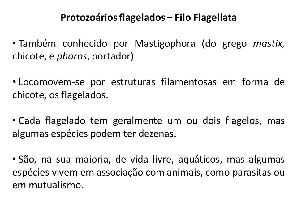 Protozoários flagelados – Filo Flagellata