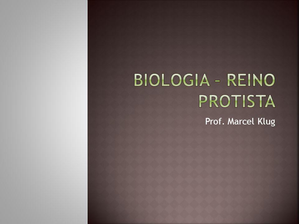 Biologia – Reino protista