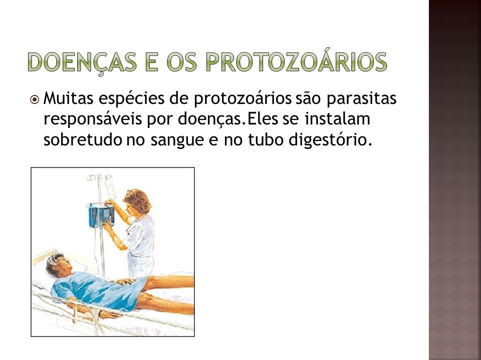 Doenças e os protozoários