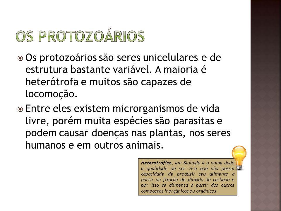 Os protozoários