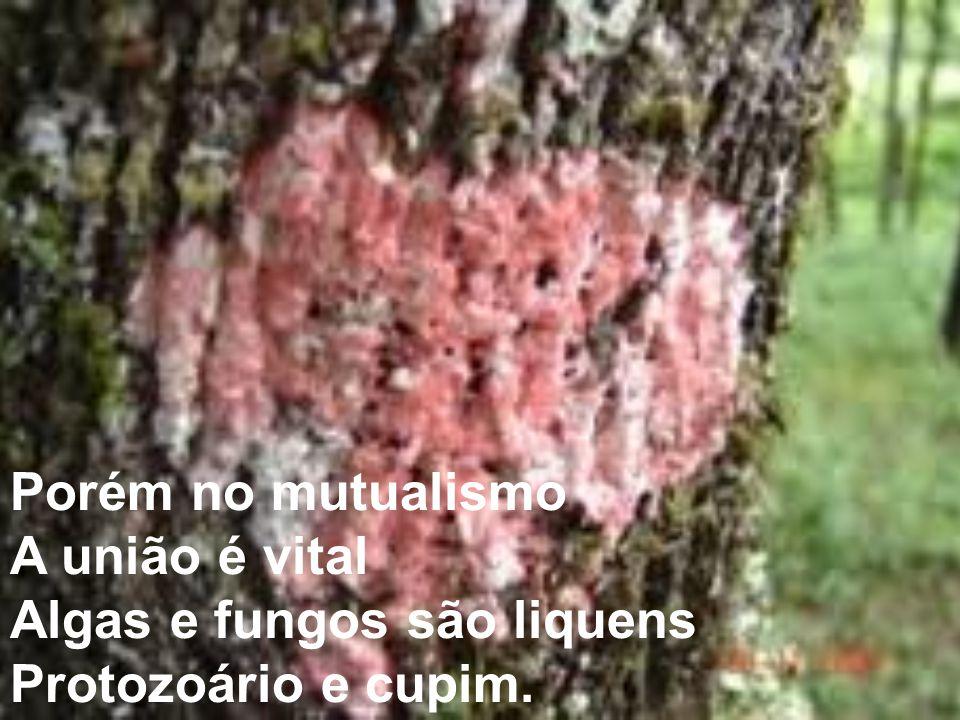 Porém no mutualismo A união é vital Algas e fungos são liquens Protozoário e cupim.
