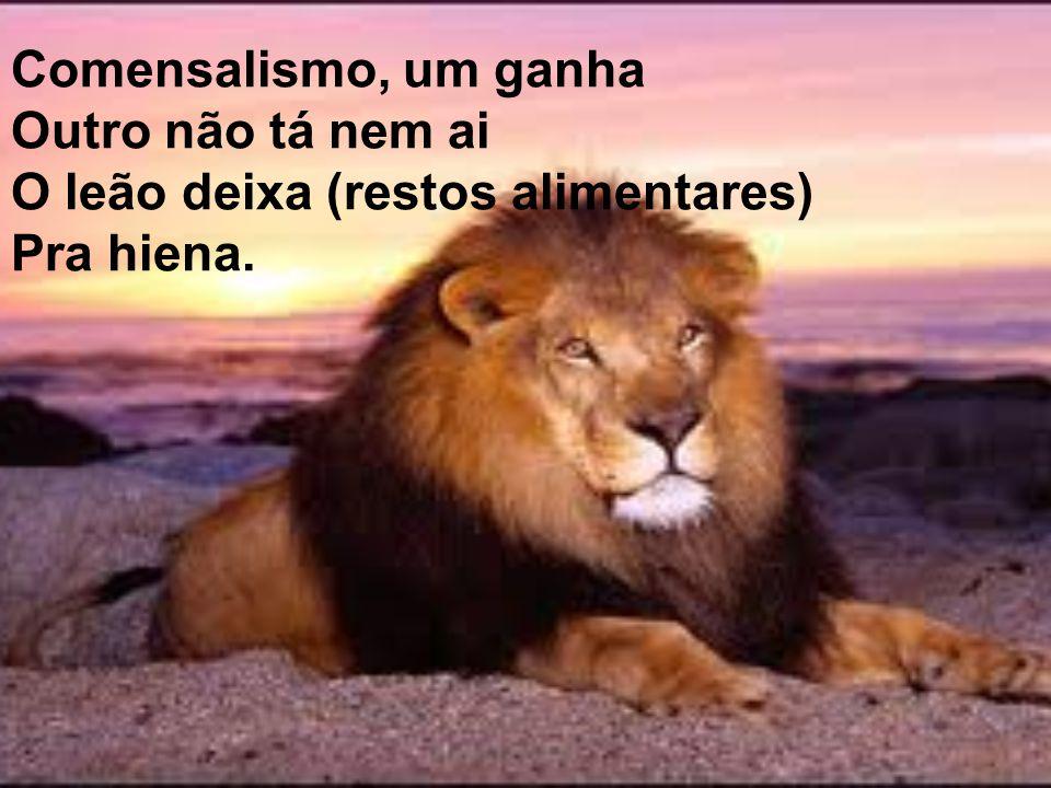 Comensalismo, um ganha Outro não tá nem ai O leão deixa (restos alimentares) Pra hiena.