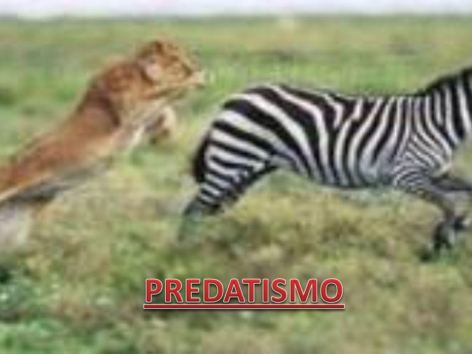 PREDATISMO