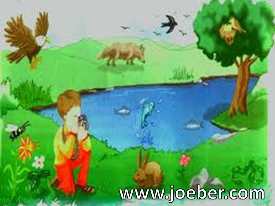www.joeber.com
