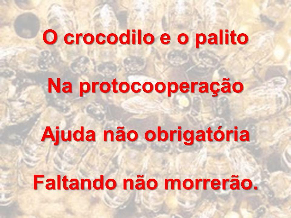 O crocodilo e o palito Na protocooperação Ajuda não obrigatória Faltando não morrerão.