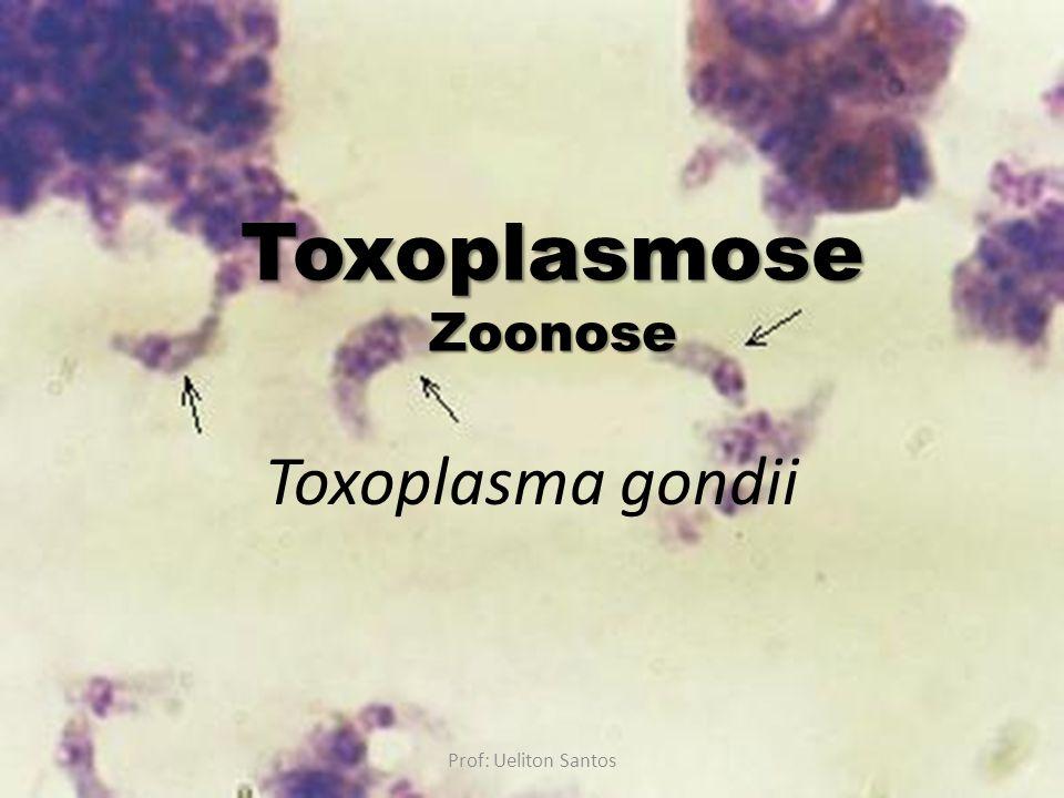 Toxoplasmose Zoonose Toxoplasma gondii Prof: Ueliton Santos