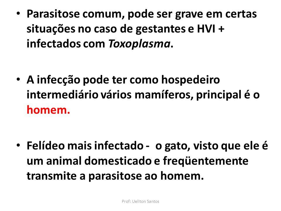 Parasitose comum, pode ser grave em certas situações no caso de gestantes e HVI + infectados com Toxoplasma.