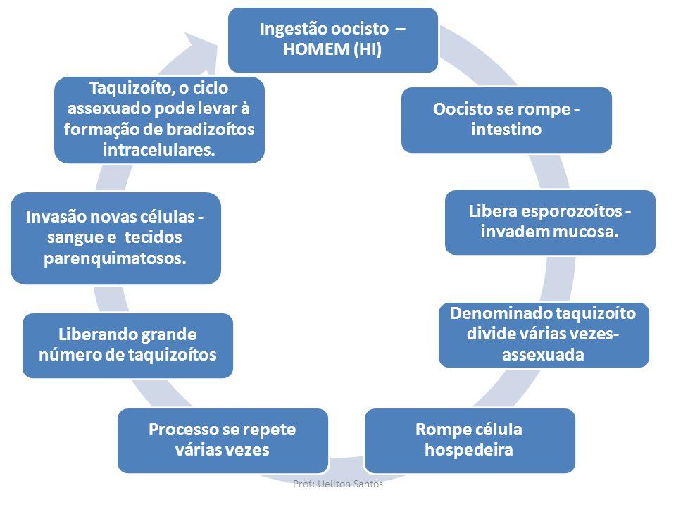 Ingestão oocisto – HOMEM (HI) Oocisto se rompe - intestino