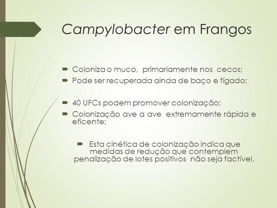 Campylobacter em Frangos