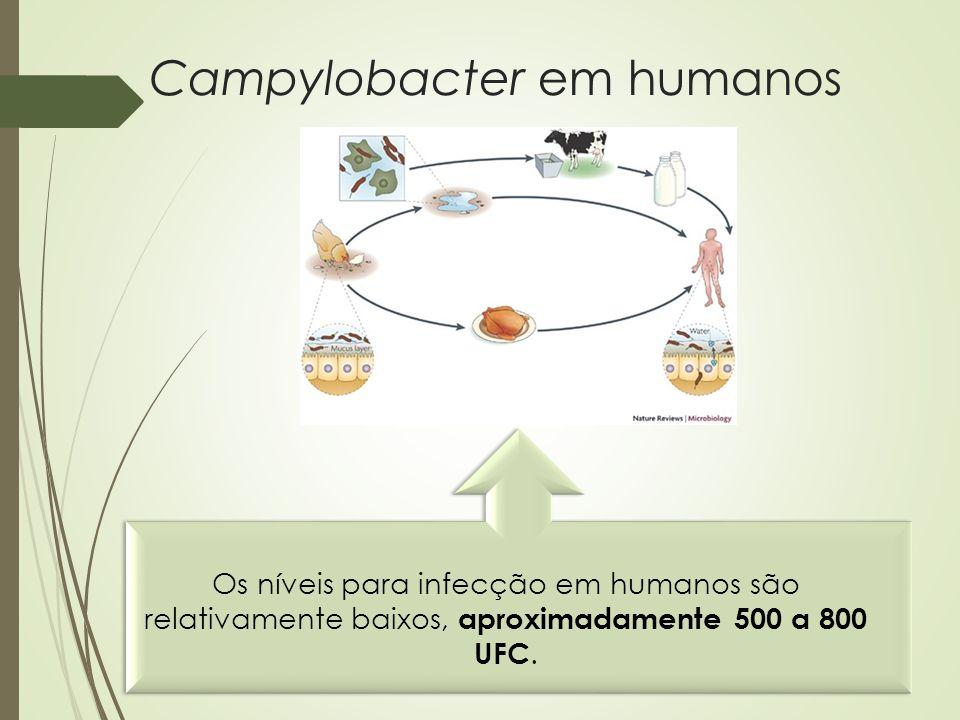 Campylobacter em humanos