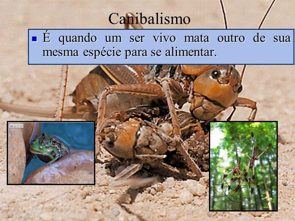 Canibalismo É quando um ser vivo mata outro de sua mesma espécie para se alimentar.