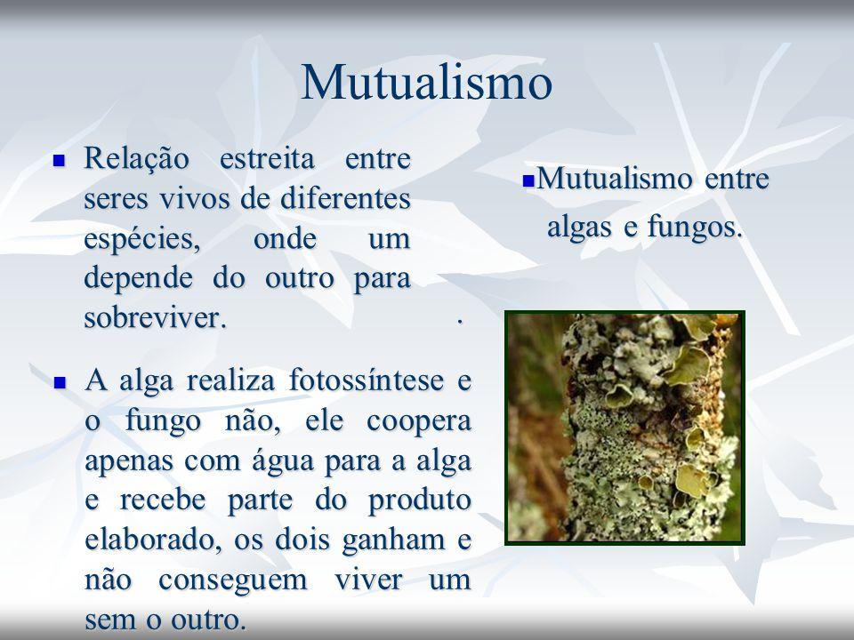 Mutualismo Relação estreita entre seres vivos de diferentes espécies, onde um depende do outro para sobreviver.