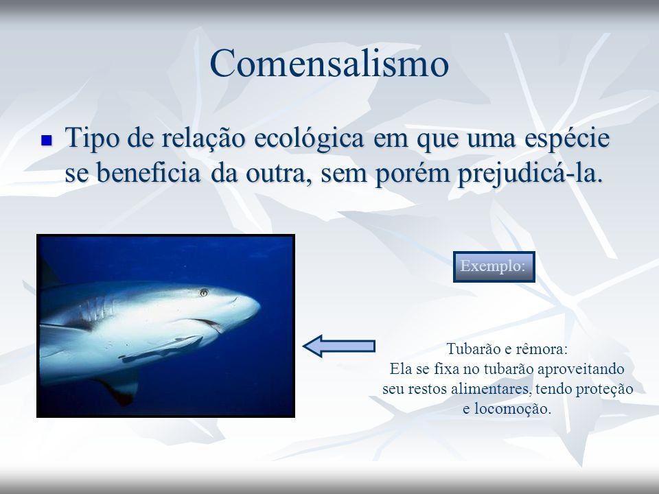 Comensalismo Tipo de relação ecológica em que uma espécie se beneficia da outra, sem porém prejudicá-la.