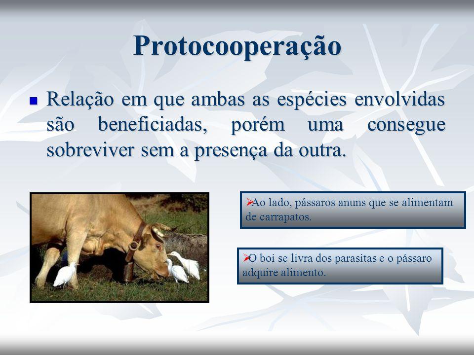 Protocooperação Relação em que ambas as espécies envolvidas são beneficiadas, porém uma consegue sobreviver sem a presença da outra.