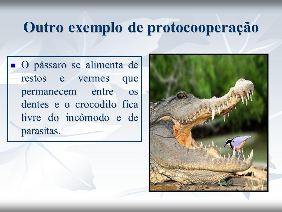 Outro exemplo de protocooperação