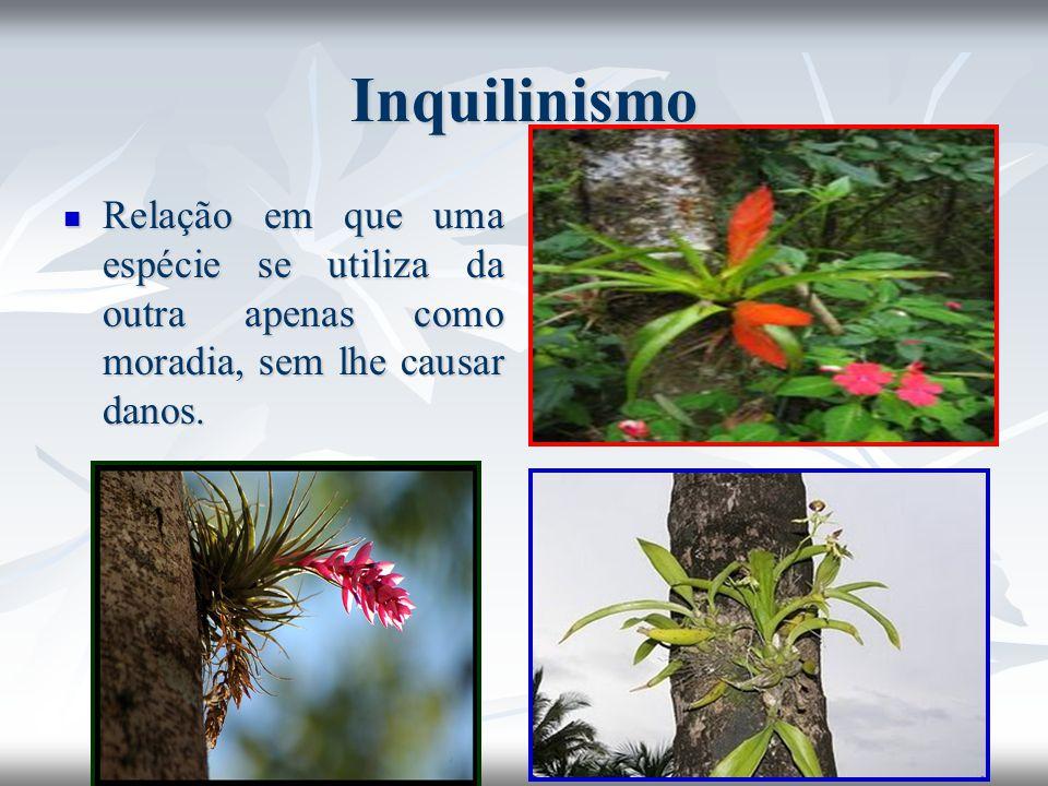 Inquilinismo Relação em que uma espécie se utiliza da outra apenas como moradia, sem lhe causar danos.