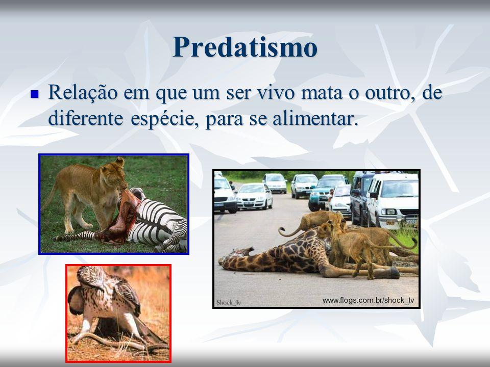Predatismo Relação em que um ser vivo mata o outro, de diferente espécie, para se alimentar.
