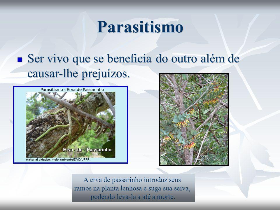 Parasitismo Ser vivo que se beneficia do outro além de causar-lhe prejuízos. A erva de passarinho introduz seus.