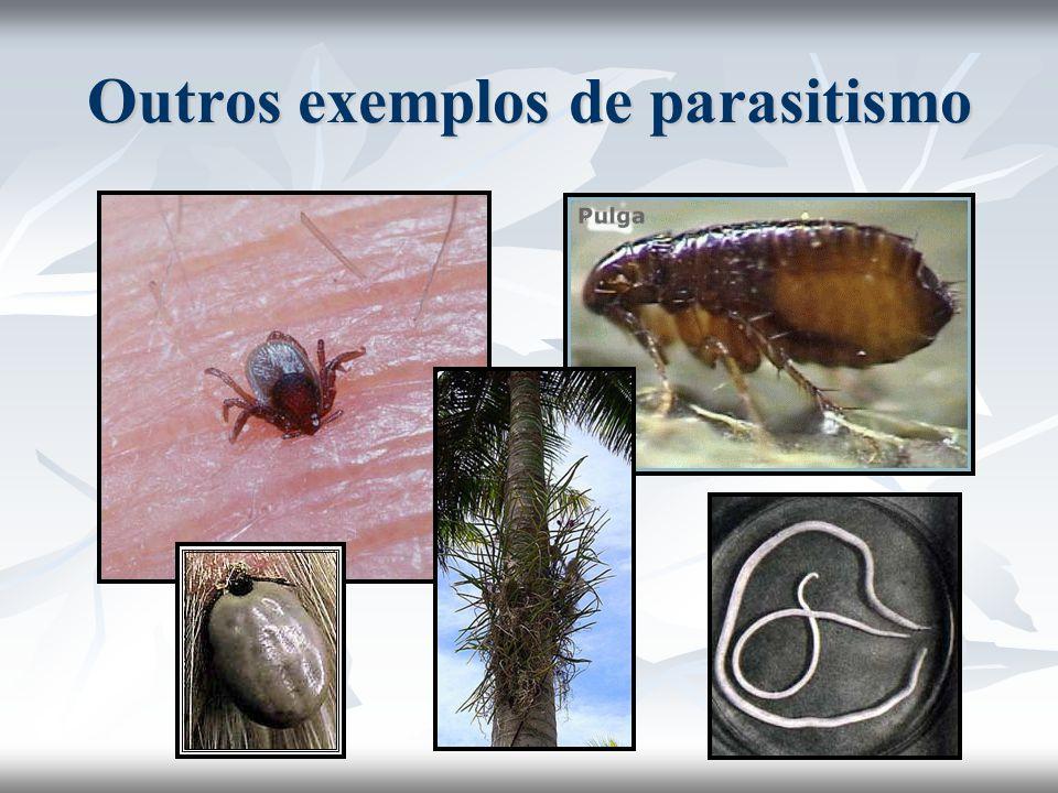 Outros exemplos de parasitismo