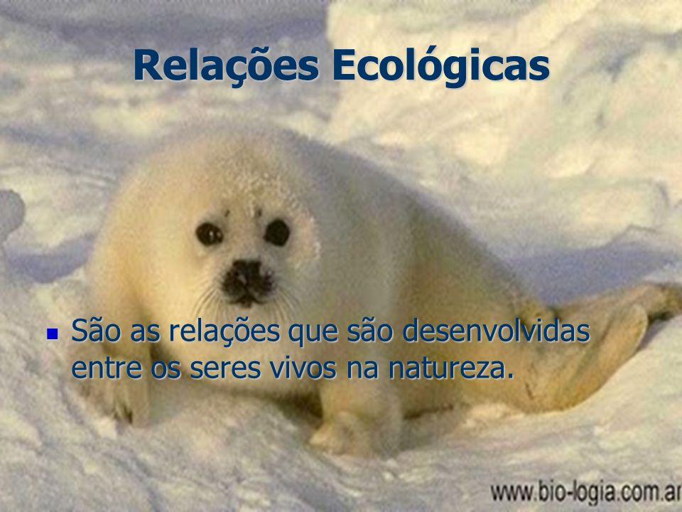 Relações Ecológicas São as relações que são desenvolvidas entre os seres vivos na natureza.