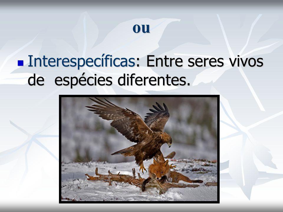 ou Interespecíficas: Entre seres vivos de espécies diferentes.