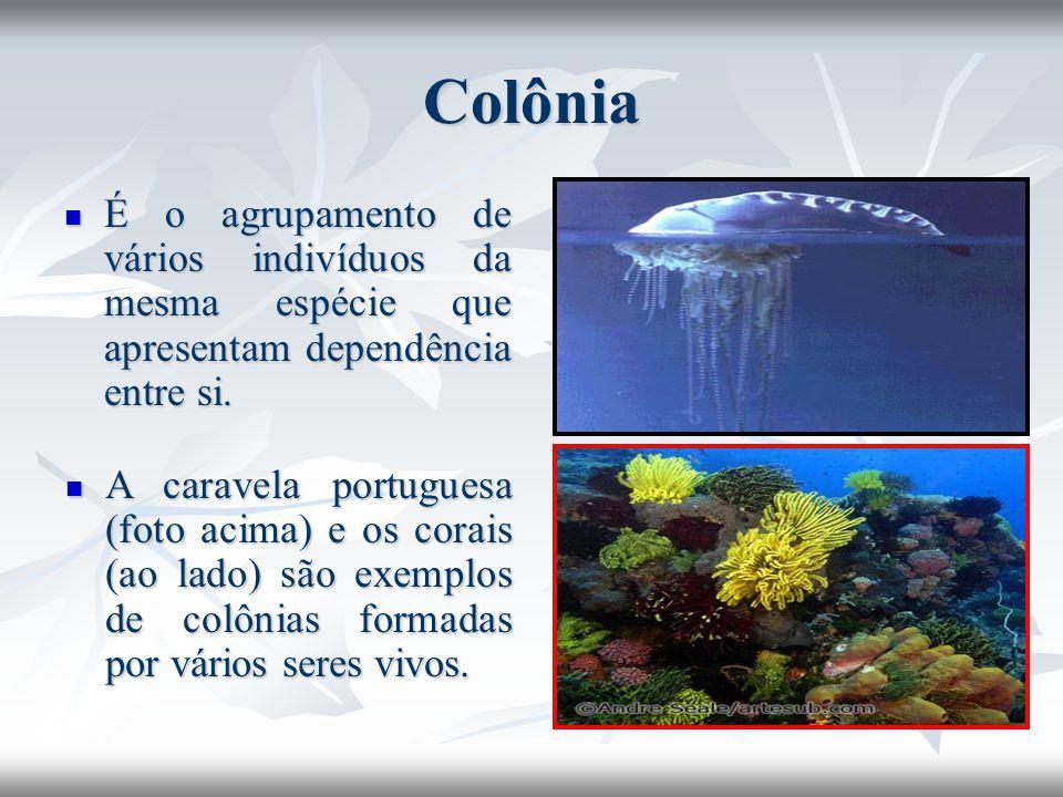 Colônia É o agrupamento de vários indivíduos da mesma espécie que apresentam dependência entre si.