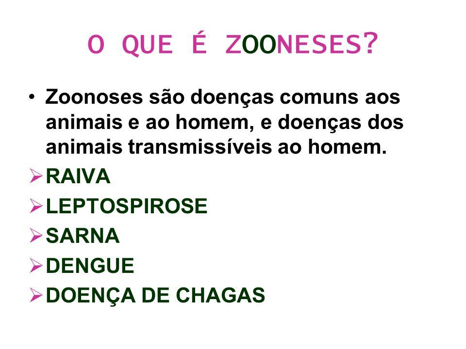 O QUE É ZOONESES Zoonoses são doenças comuns aos animais e ao homem, e doenças dos animais transmissíveis ao homem.