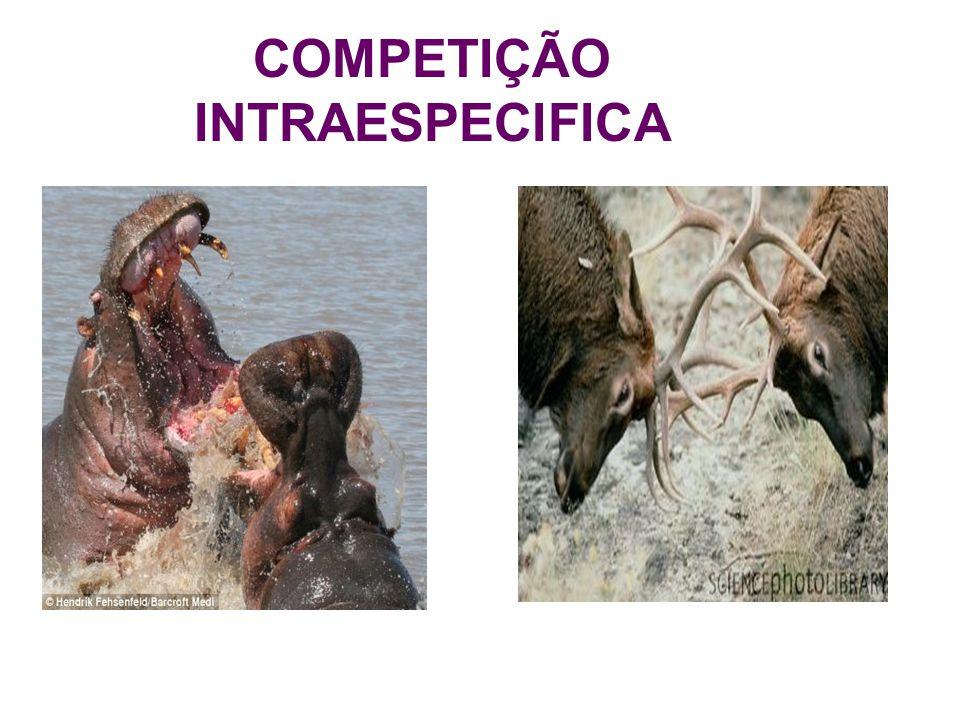 COMPETIÇÃO INTRAESPECIFICA