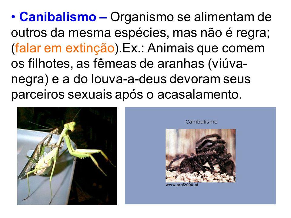 Canibalismo – Organismo se alimentam de outros da mesma espécies, mas não é regra; (falar em extinção).Ex.: Animais que comem os filhotes, as fêmeas de aranhas (viúva-negra) e a do louva-a-deus devoram seus parceiros sexuais após o acasalamento.