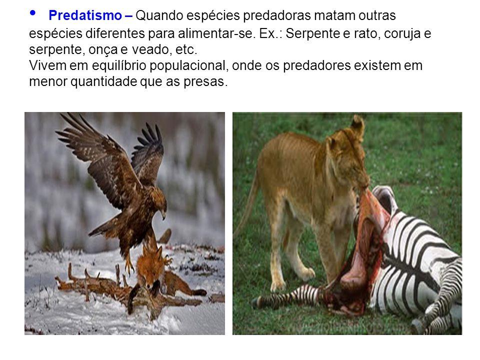 Predatismo – Quando espécies predadoras matam outras espécies diferentes para alimentar-se.