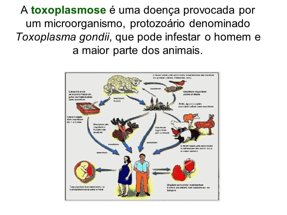 A toxoplasmose é uma doença provocada por um microorganismo, protozoário denominado Toxoplasma gondii, que pode infestar o homem e a maior parte dos animais.