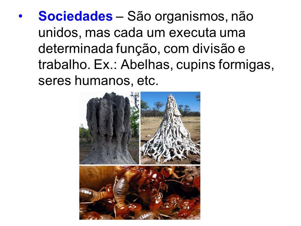 Sociedades – São organismos, não unidos, mas cada um executa uma determinada função, com divisão e trabalho.