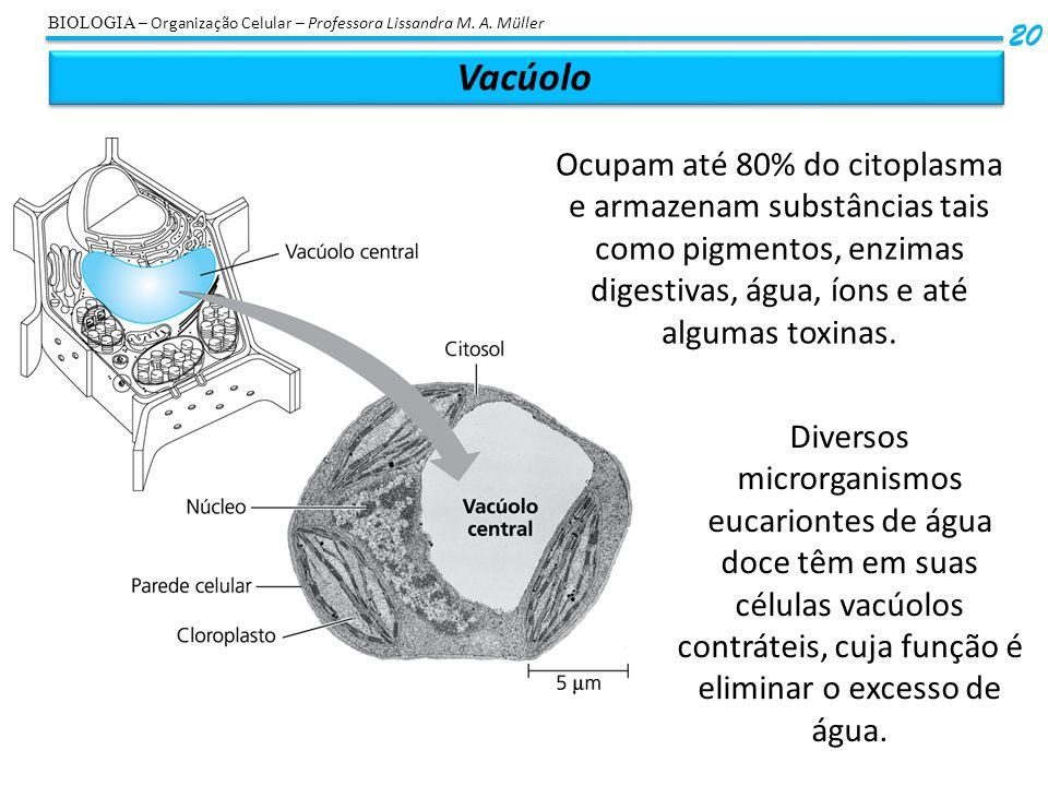 BIOLOGIA – Organização Celular – Professora Lissandra M. A. Müller