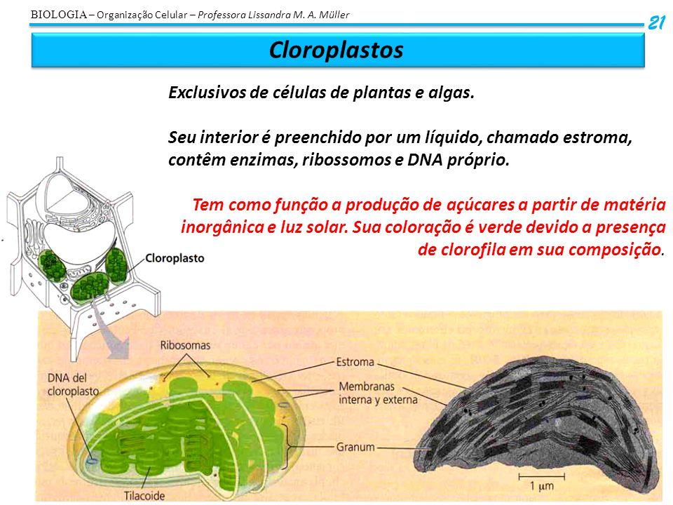 Cloroplastos 21 Exclusivos de células de plantas e algas.