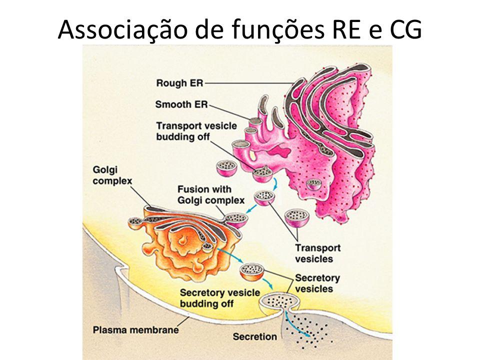 Associação de funções RE e CG