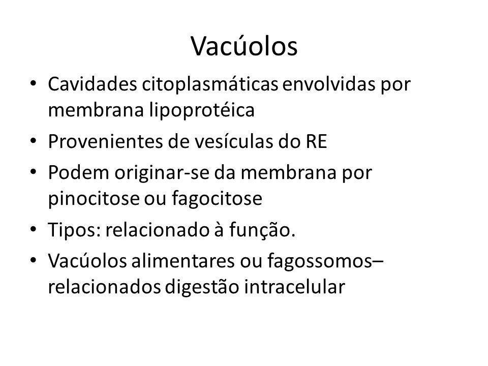 Vacúolos Cavidades citoplasmáticas envolvidas por membrana lipoprotéica. Provenientes de vesículas do RE.