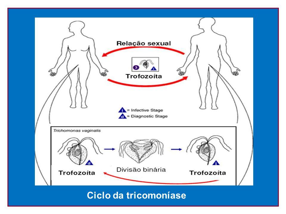 Ciclo da tricomoníase