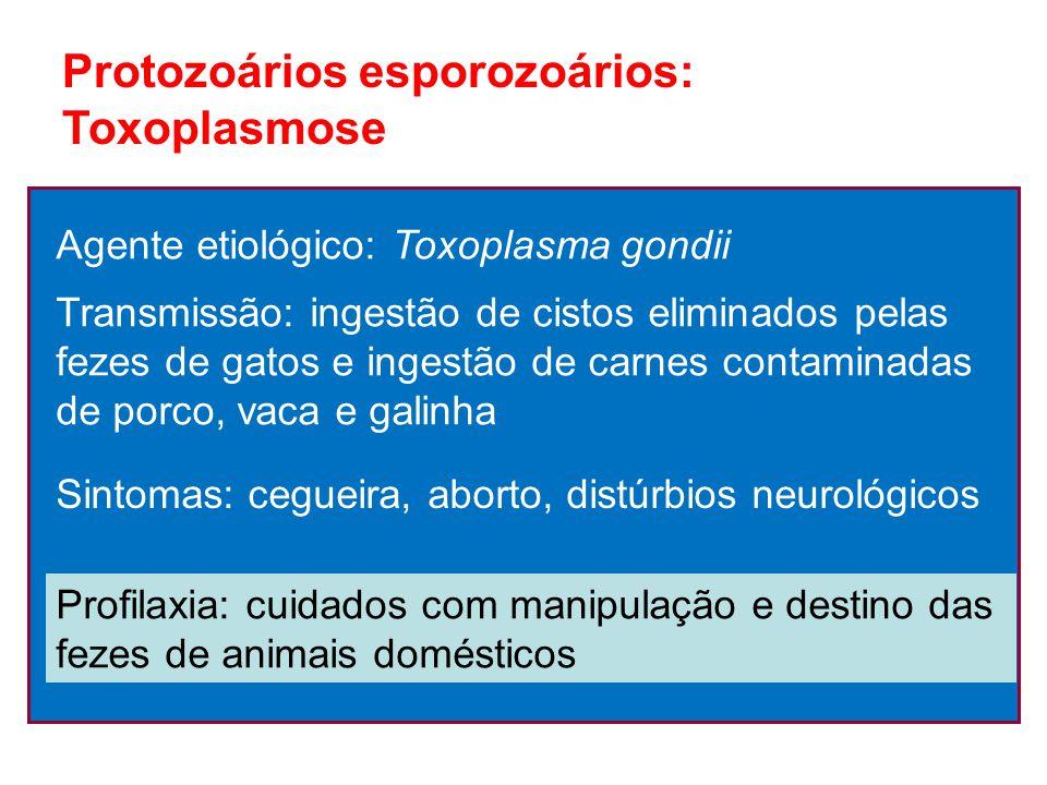 Protozoários esporozoários: Toxoplasmose