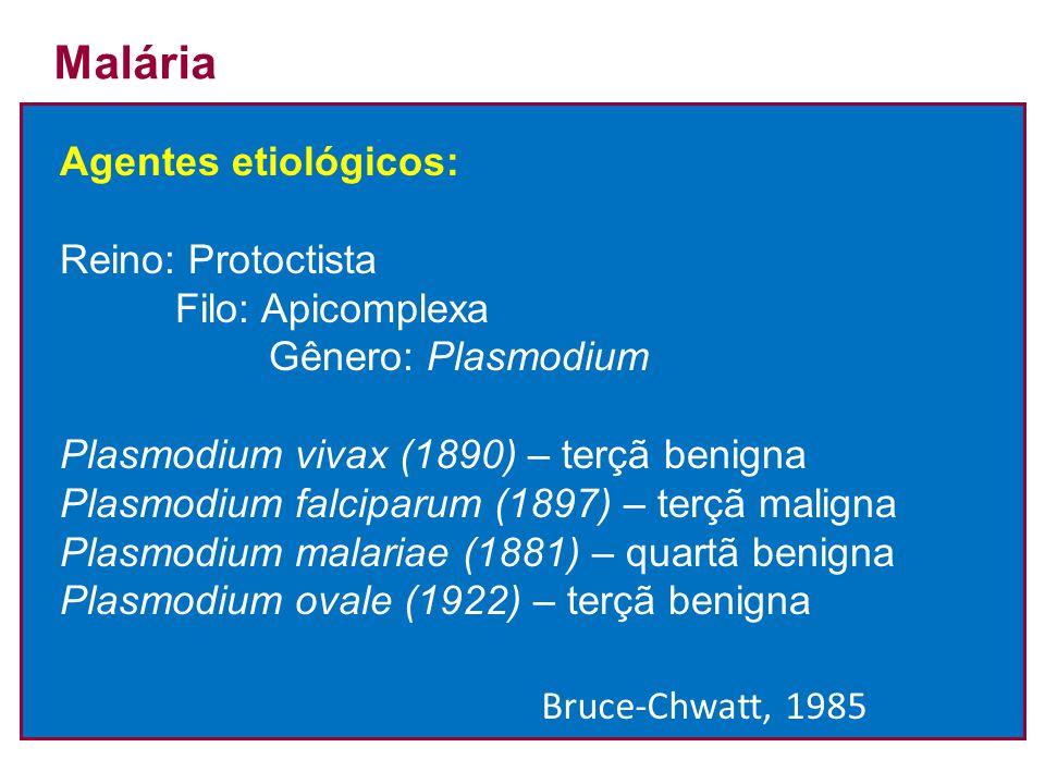 Malária Agentes etiológicos: Reino: Protoctista Filo: Apicomplexa