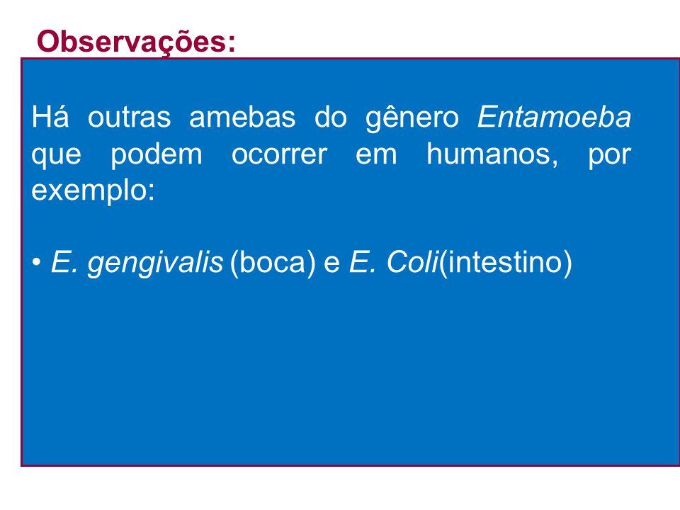 Observações: Há outras amebas do gênero Entamoeba que podem ocorrer em humanos, por exemplo: • E.