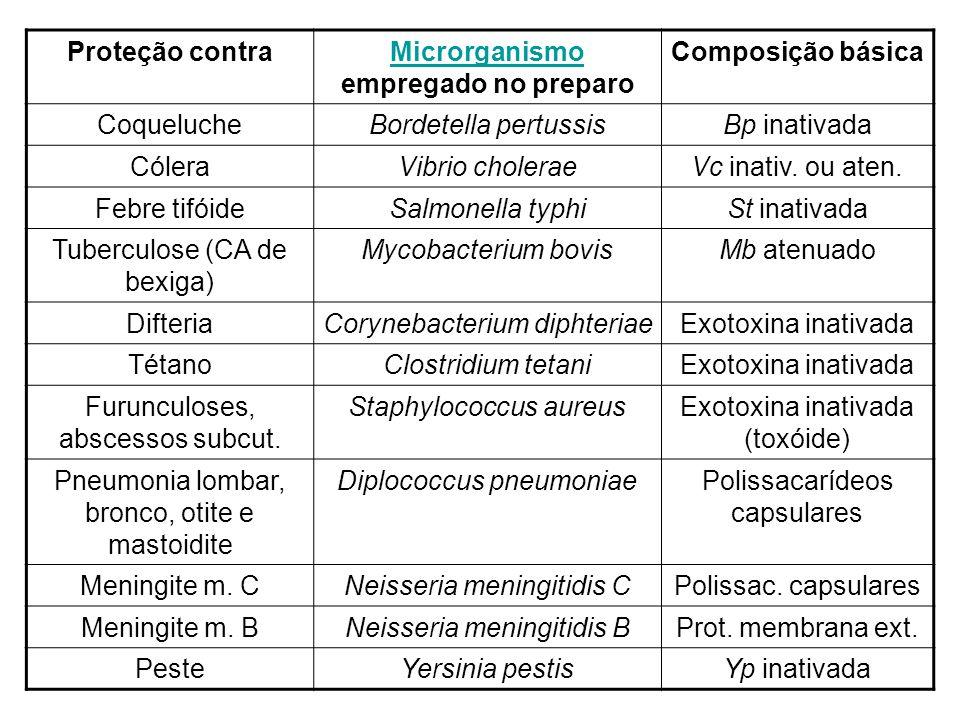 Microrganismo empregado no preparo