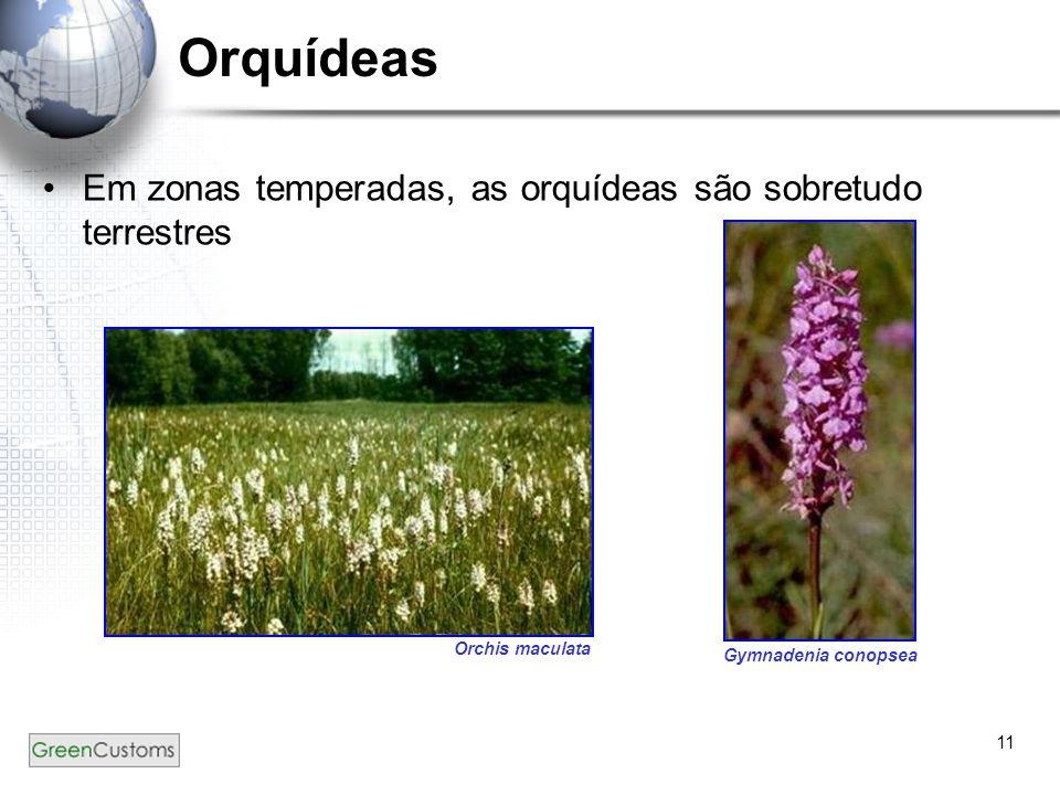 Orquídeas Em zonas temperadas, as orquídeas são sobretudo terrestres .