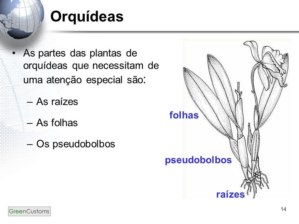 Orquídeas raízes. pseudobolbos. folhas. As partes das plantas de orquídeas que necessitam de uma atenção especial são: