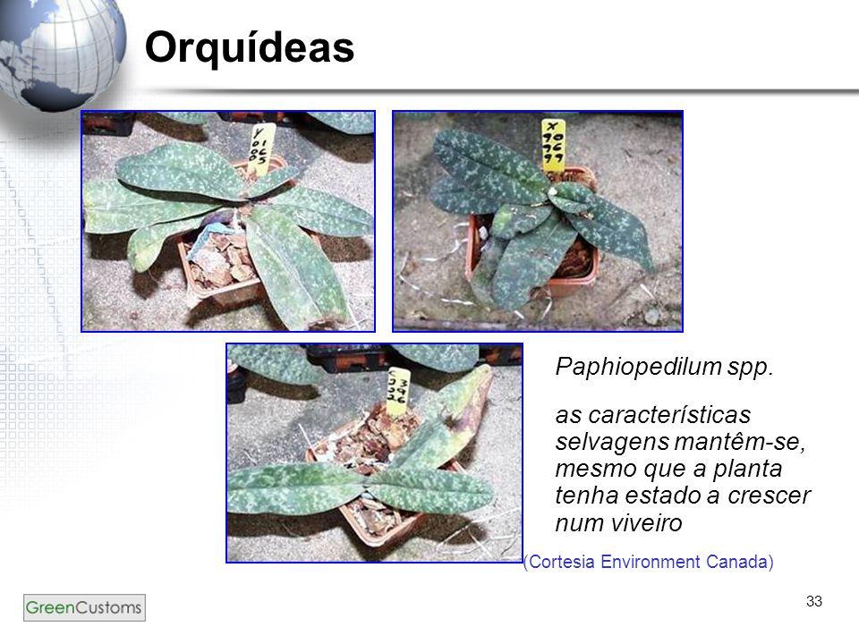 Orquídeas Paphiopedilum spp.