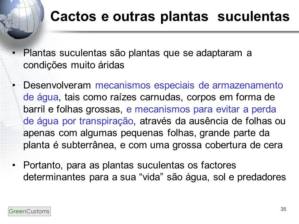 Cactos e outras plantas suculentas