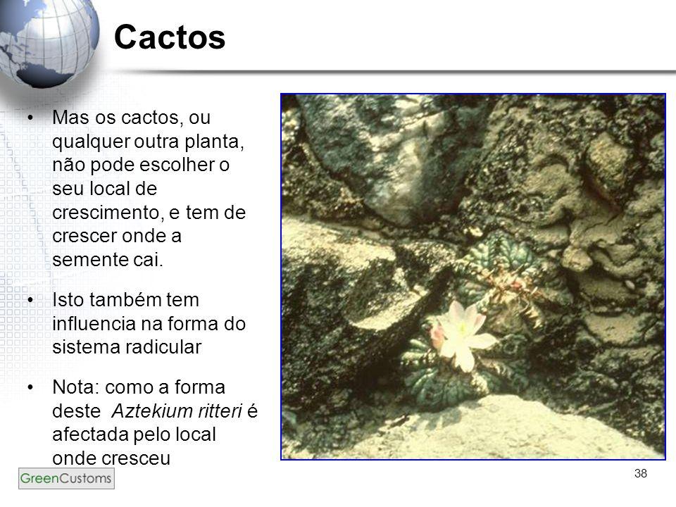 Cactos Mas os cactos, ou qualquer outra planta, não pode escolher o seu local de crescimento, e tem de crescer onde a semente cai.