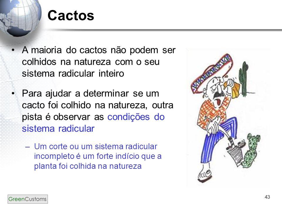 Cactos A maioria do cactos não podem ser colhidos na natureza com o seu sistema radicular inteiro.