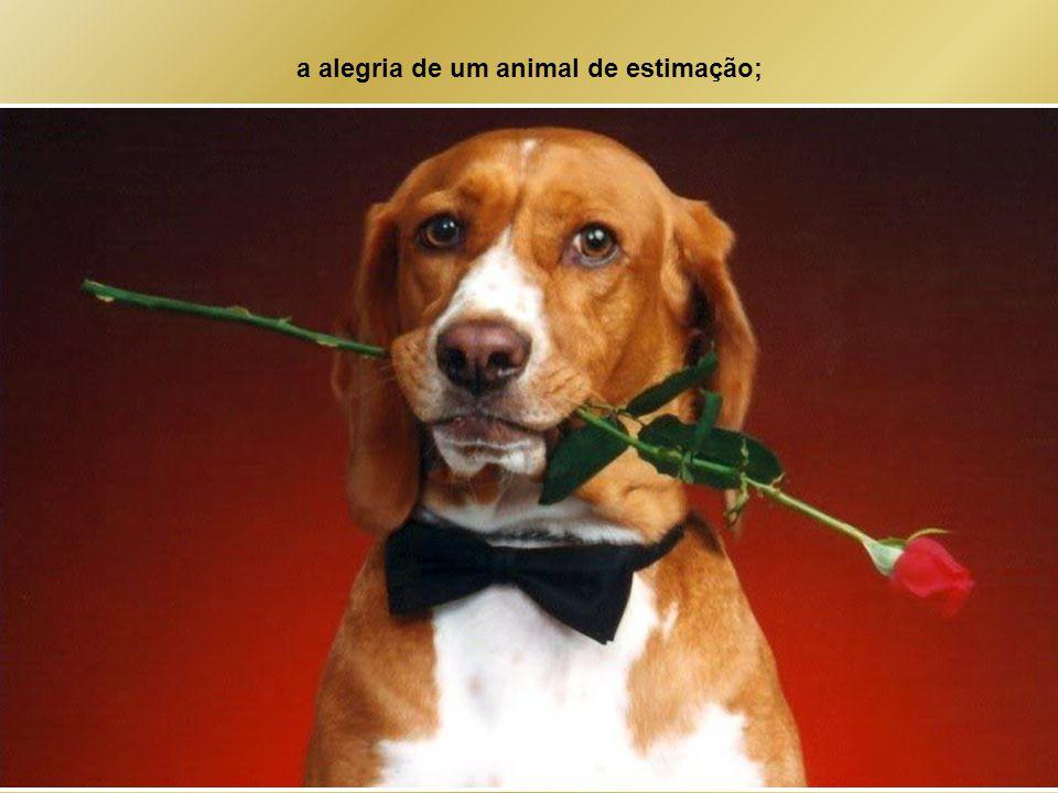 a alegria de um animal de estimação;