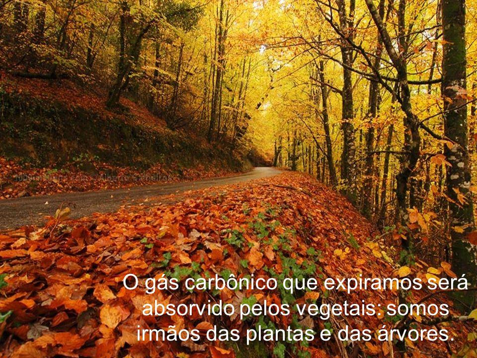 O gás carbônico que expiramos será absorvido pelos vegetais: somos irmãos das plantas e das árvores.