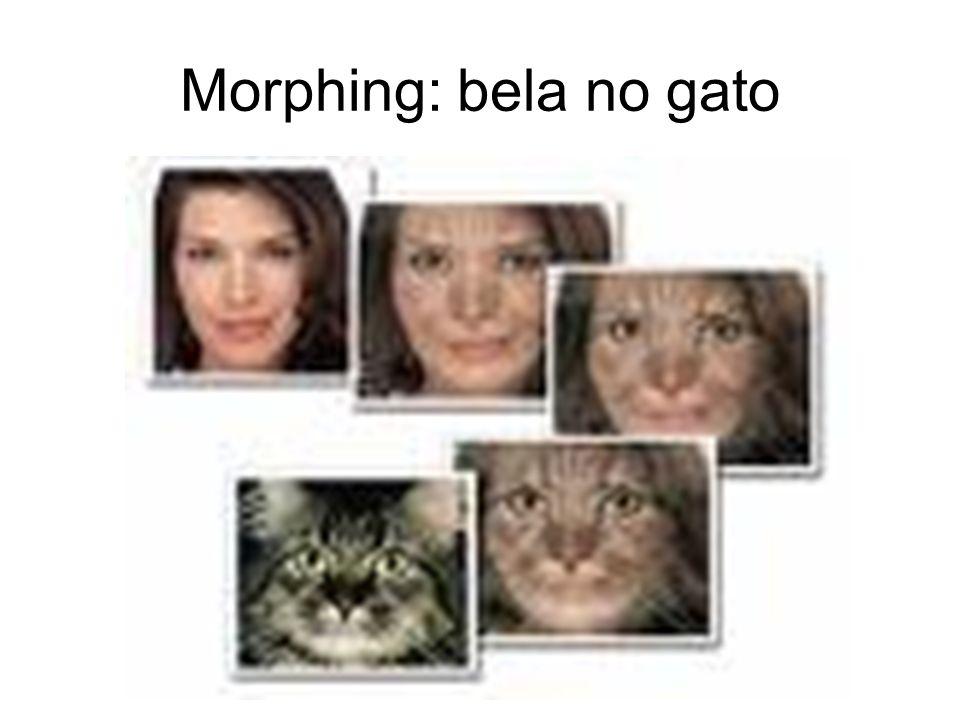 Morphing: bela no gato
